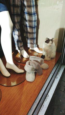 best model. Bestmodel Bestmoment Bestmeow Cat Catoftheday Cat♡