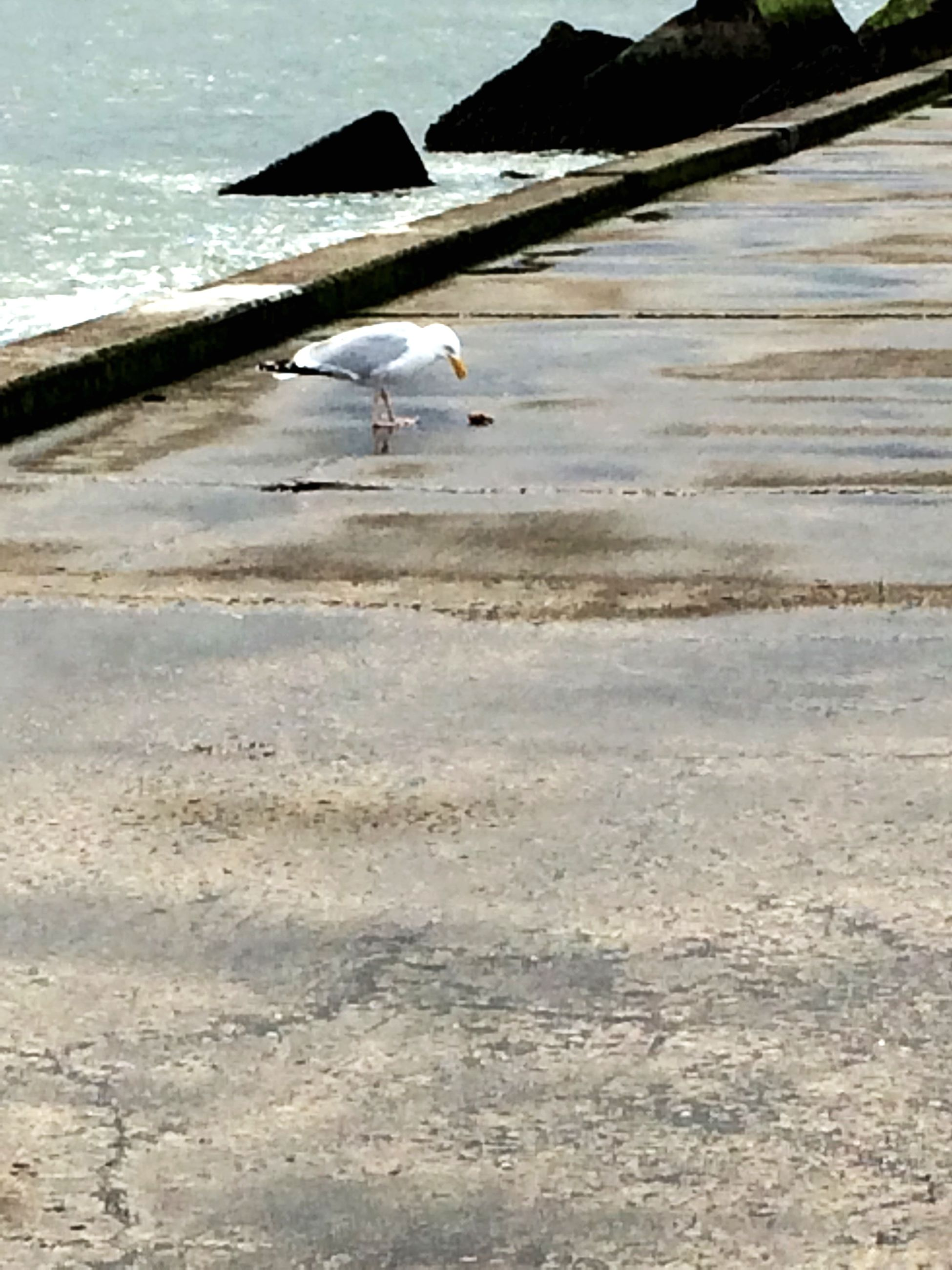 bird, beach, animal themes, sea, water, flying, animals in the wild, wildlife, sand, seagull, shore, one animal, day, spread wings, sunlight, wave, nature, outdoors, full length, mid-air