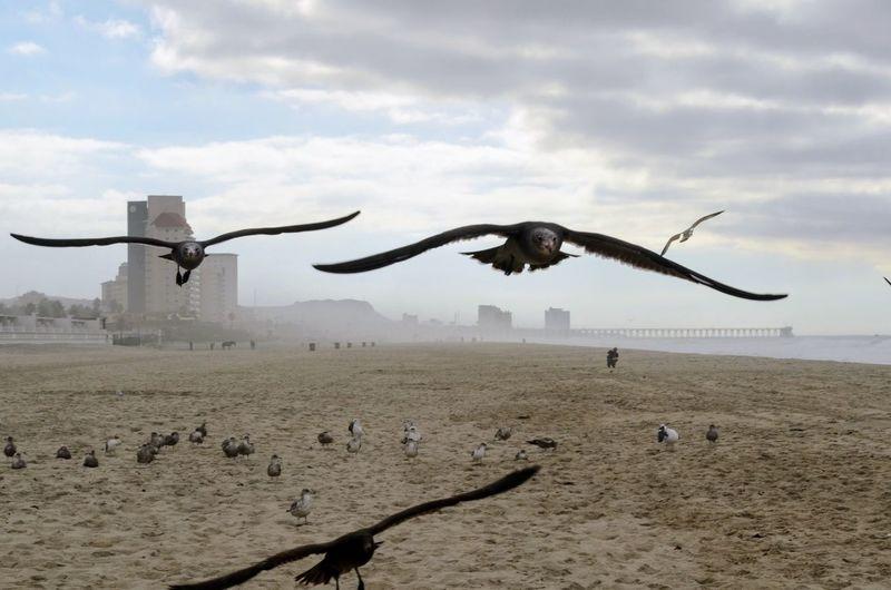 Birds flying over sand against sky