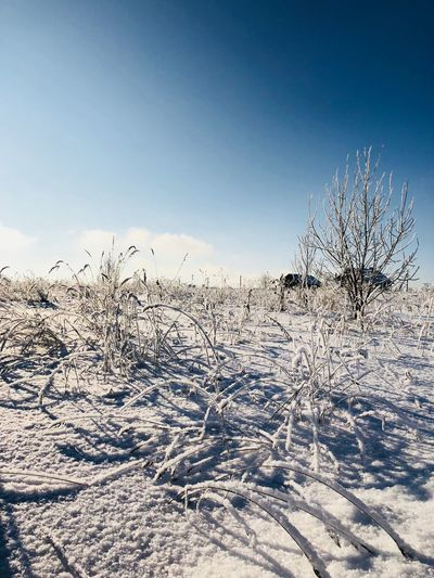 Winter Cold Temperature Snow Nature Tranquil Scene Tranquility Frozen Tree Clear Sky Bare Tree Landscape Outdoors Cold Beauty In Nature Blue Field Day Scenics No People Sky