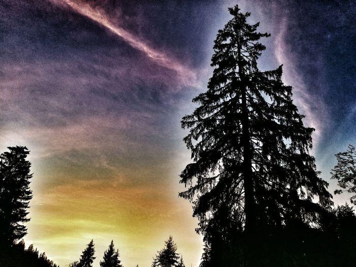 Eyemphotography EyeEmNewHere Sonnenuntergang Nature Free Likeit Sun Austria Loveit Tree Sunset Sky