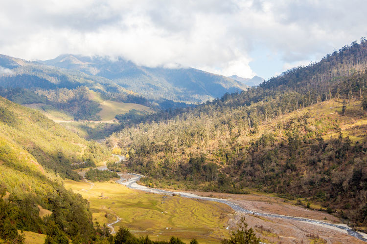 ASIA Clearing Nature Pine Travel Bhutan Clouds Forest Landscape Meadow Merak Sakteng Trek Off The Beaten Path Remote River Tourism Trek Valley Wildlife