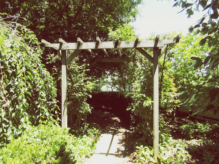 Wooden Arch Outside Outside Photography No People Zero People Plant Vine Vine - Plant Vines Vines On A Structure Frame Arch Wood Wooden Arch Tree Sunlight Park - Man Made Space Sky Growing Young Plant Archway Plant Life