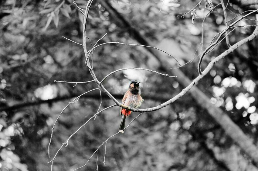 Bulbuls Bird Photooftheday Eyeemgallary
