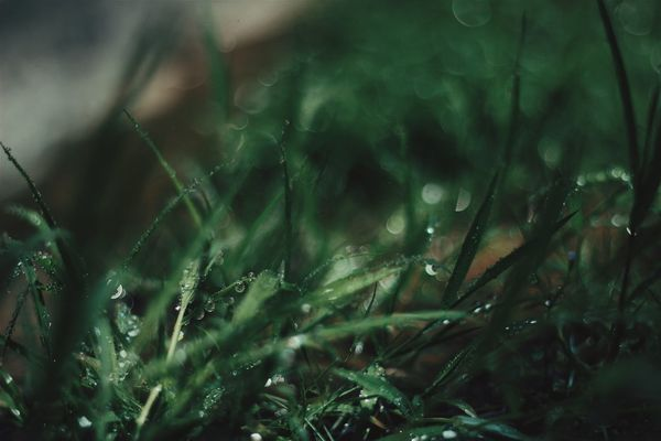Canonphotography Canon_official Canon Natgeo عرفانphoto Tpppfeature VSCO Nature Green Nature On Your Doorstep Green Color Greenery Nature_collection Green Leaves Naturephotography Green Plant