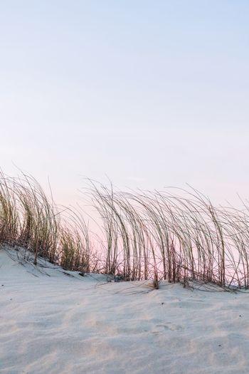 Dune Sky Winter