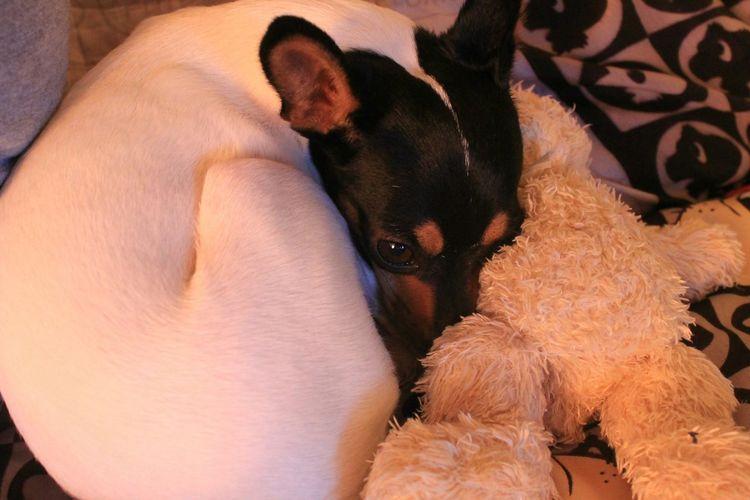 awww sleep with tedy Dog Cute Love Tedybear Sweet Mydog Doglover Beautiful Cutedog Doglover