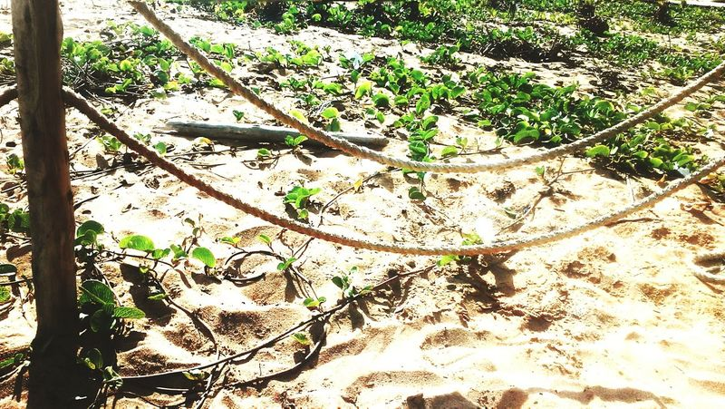 Nature Tree Sunlight Sand High Angle View No People Growth Outdoors Green Color Day Beauty In Nature Freshness Tranquility Scenics Plant Fragility Close-up