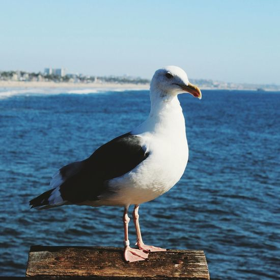 Close-Up Of Seagull Perching On Shore Against Sea