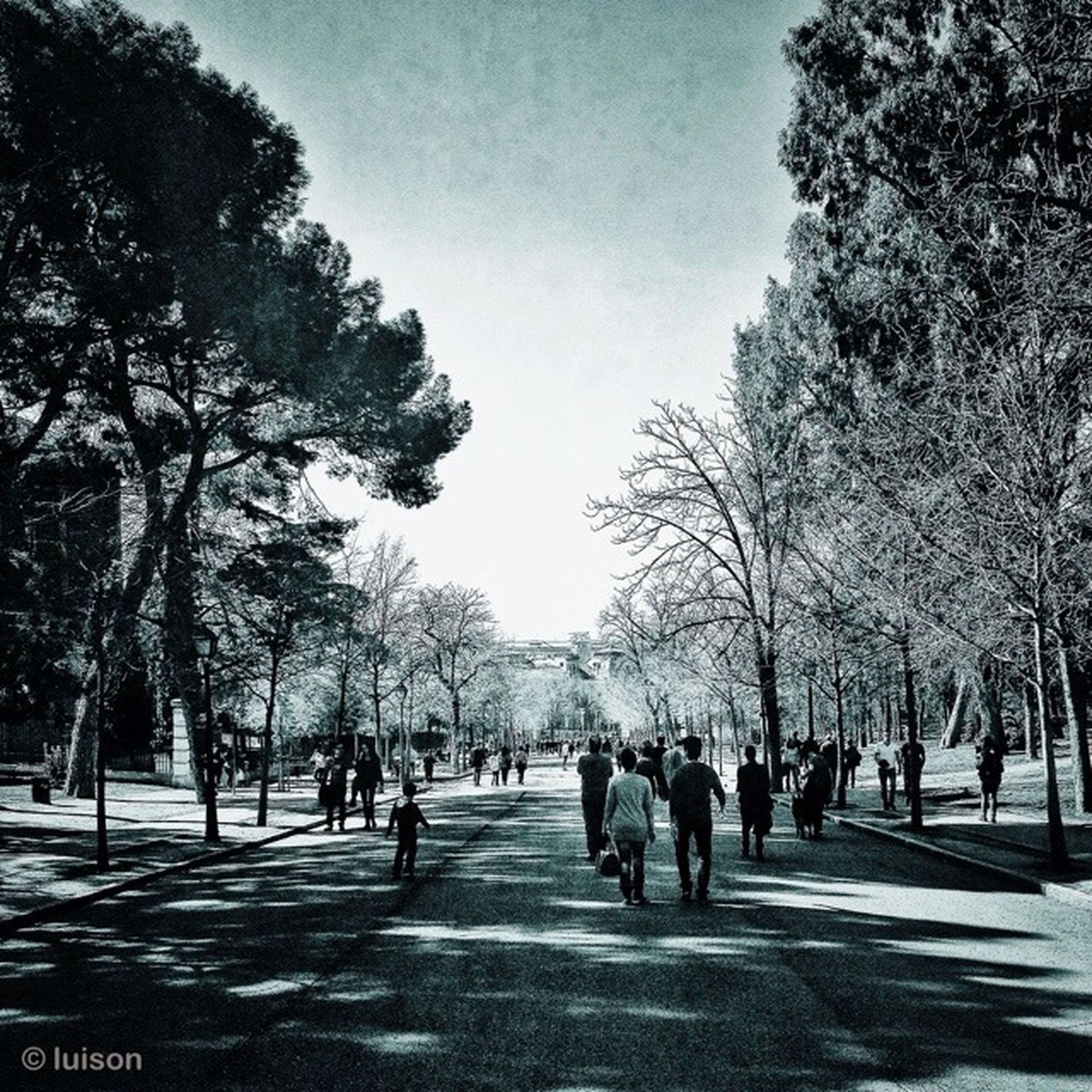 tree, the way forward, person, men, treelined, walking, sky, road, lifestyles, large group of people, leisure activity, park - man made space, street, growth, group of people, footpath, diminishing perspective, nature, transportation
