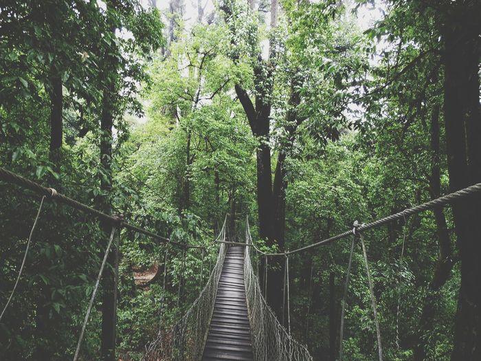 Canopy bridge lolegaon