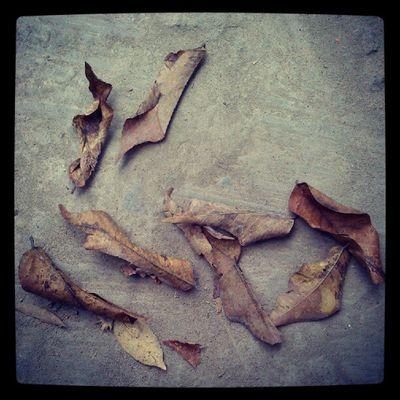 Dead leaf InstaAsia INDONESIA Instagram Nature instamarinda dead