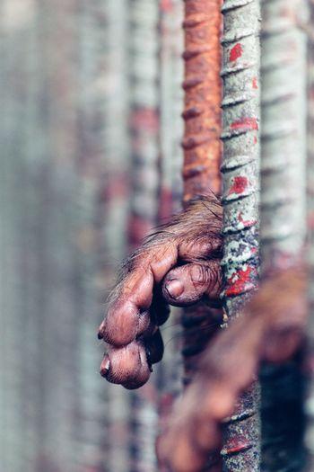 Animal Themes Cage Prison Hand Animal Body Part Trapped Caged Ilustracion Ilustration Captive Animals Punishment Security Bar Arrest Handcuffs  Animals In Captivity Prison Cell Prison Bars Body Part Prisoner Captivity