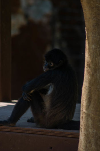 EL MONO. The Monkey with tired look as the sun rages in the sky. Animal Themes Animal Wildlife Animals In The Wild Close-up Day Full Length Mammal Monkey Nature No People One Animal Outdoors Sitting Wood - Material