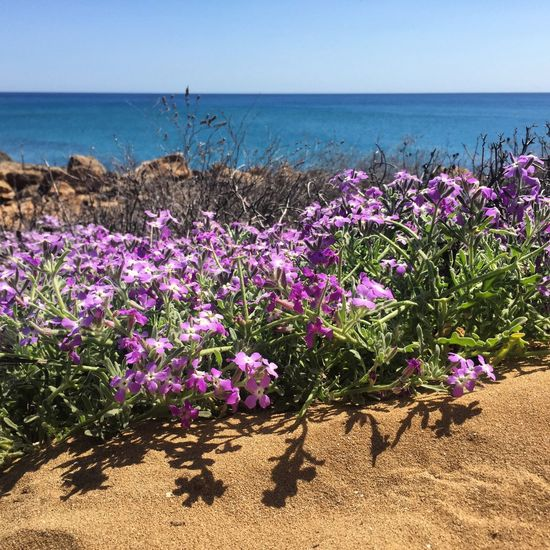 Purple flowering plants by sea against sky