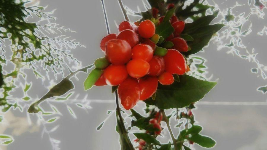 Berries Goji Bacche Salute Nature