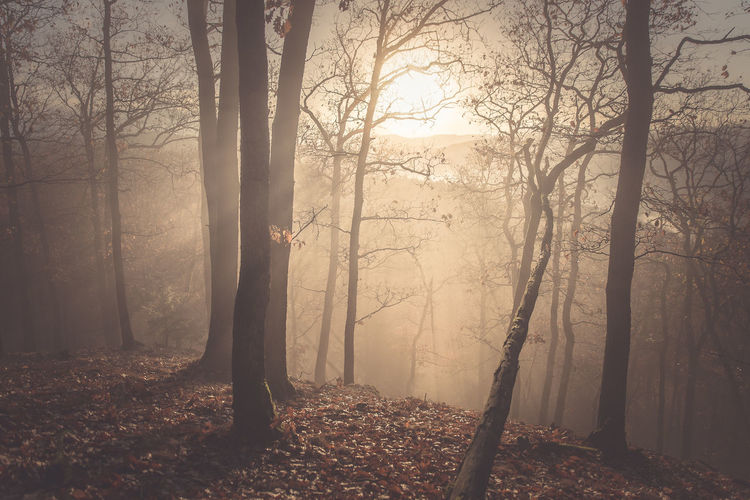 Tree Land Forest Plant Trunk Tree Trunk Fog Nature WoodLand Beauty In Nature Tranquility Tranquil Scene Day Bare Tree Non-urban Scene Environment Outdoors Growth Cold Temperature Hazy