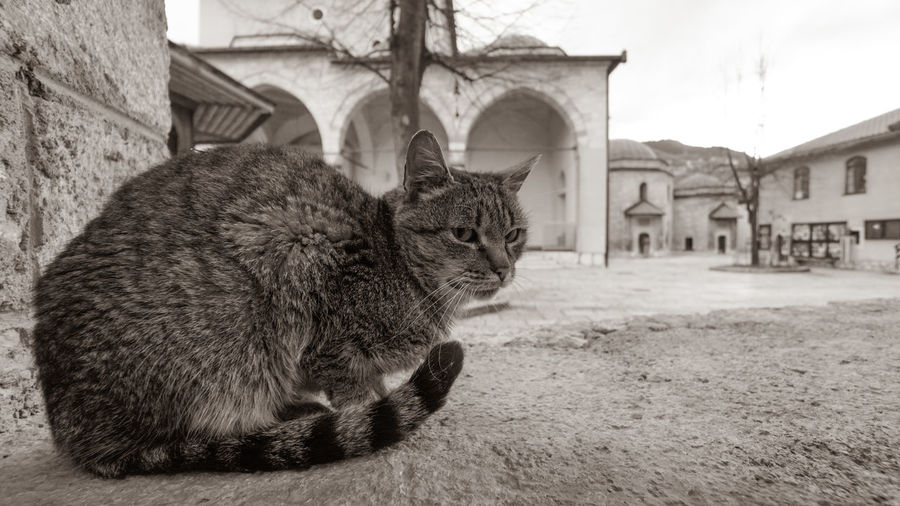 Close-up of a cat sitting against building
