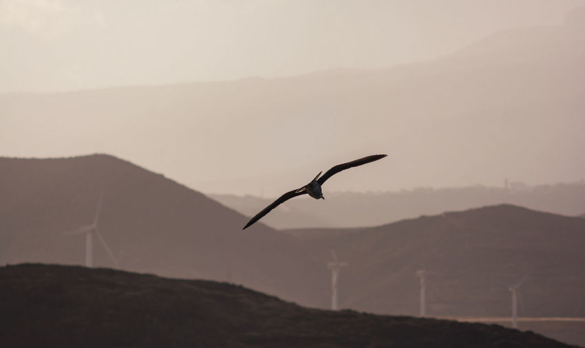 Alternative Energy Animal Themes Animal Wildlife Animals In The Wild Beauty In Nature Bird Day Environmental Conservation Industrial Windmill Landscape Monochrome Mountain Mountain Range Nature No People Outdoors Renewable Energy Scenics Sunset Tenerife Tranquil Scene Wind Power Wind Turbine