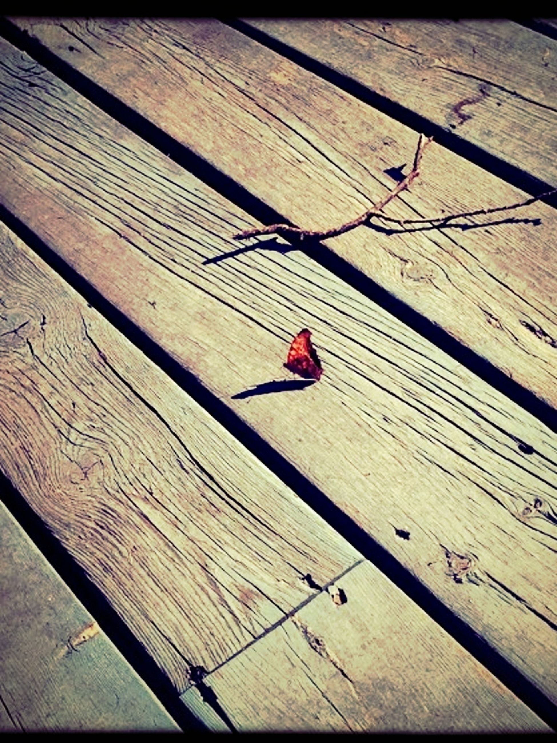 insect, wood - material, animal themes, wooden, high angle view, wildlife, animals in the wild, plank, one animal, red, day, no people, wood, outdoors, sunlight, close-up, shadow, nature, wall - building feature, pattern