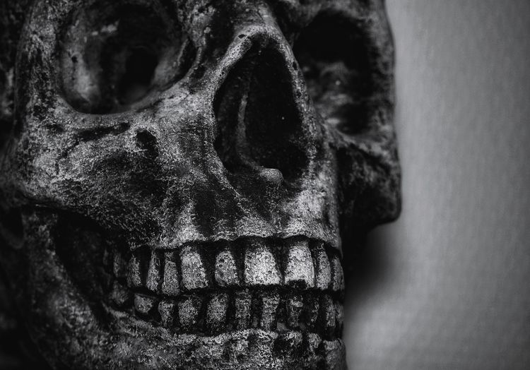Skull Concrete Concrete Skull Only Men One Man Only One Person Adults Only Close-up Human Body Part Adult Indoors  Day