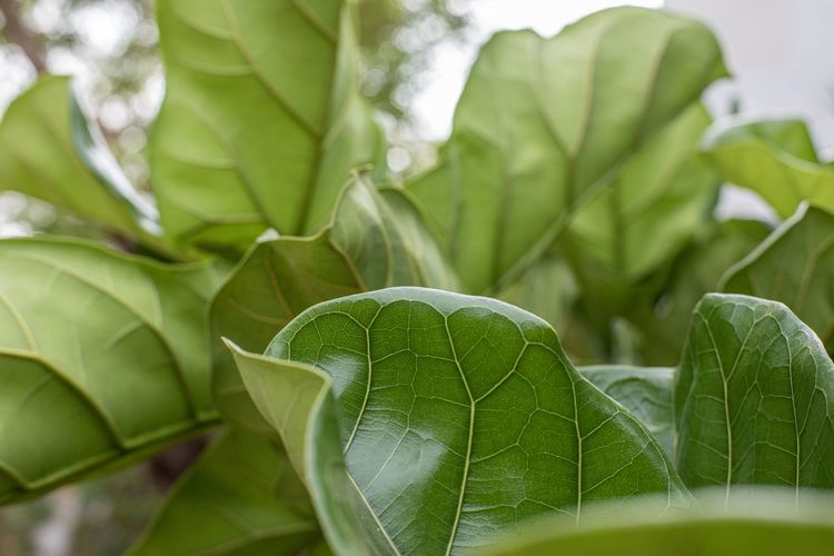 Leaf structure,