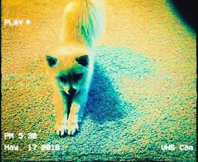 Max posing Pets Dog City