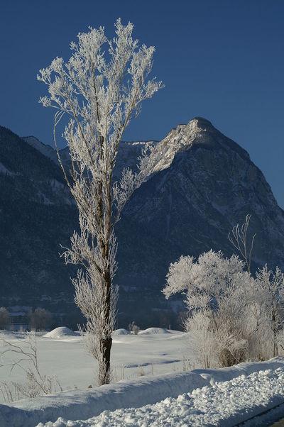 Wintermorgen Clear Sky Cold Temperature Day Eis Landscape Mountain Nature Power In Nature Snow Schnee Schneelandschaft Baum Tree Winter Schweiz Switzerland Wallis Leuk