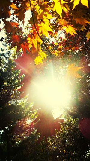 팔달산에서 가을에 단풍과 빛이 어우러져~ That's Me
