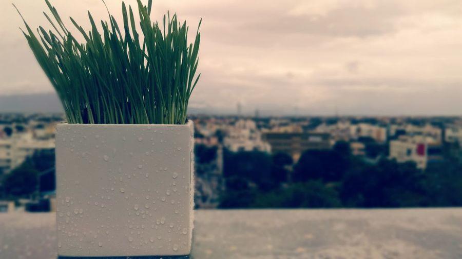 Plants 🌱 Day