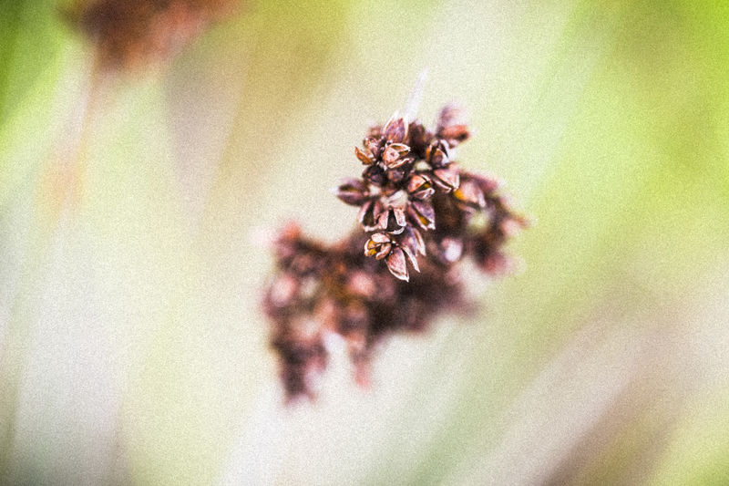 A macro shot of a group of tiny seed pods against an out of focus, soft, streaked green background. Beauty In Nature Bokeh Close-up Day Flower Flower Head Fragility Freshness Growth Macro Nature No People Outdoors Petal Plant Seed Pod Seed Pods Selective Focus Wallpaper