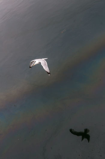 Bird Flying Over Streak Of Multi Colored Water Surface