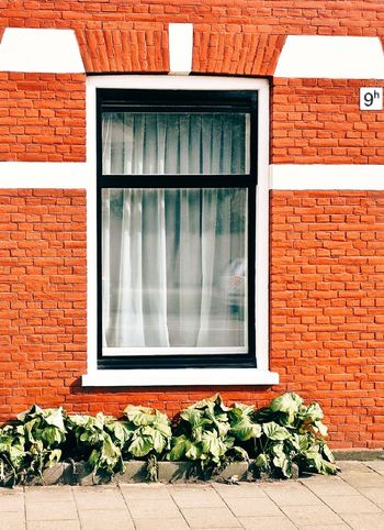 Window No People Day Outdoors Plant Thenetherlands World Beautiful Light EyeEmNewHere Life Amsterdam Street Outside Photography Outdoor Streetphotography House Orange Colorful Home Sunnyday Green White