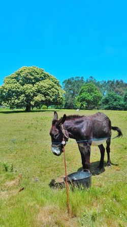 Peaceful Domestic Animals One Animal Animal Themes Mammal Green Color Tree Day No People Standing Nature Grass Pets Outdoors Sky donkey Farm