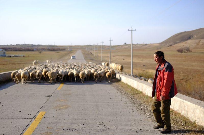 向左走的牧羊人