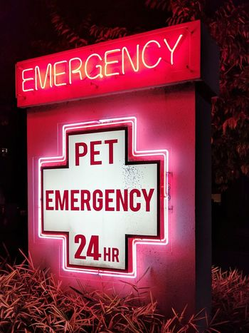 Red Text No People Outdoors Night Neon Close-up EyeEmNewHere Team Pixel Pet Pets Pet Care Veterinarian Vet  Animal Hospital Emergency Emergency Room Nightphotography Colorful Neon Sign Glow Glowing Ambient Rethink Things