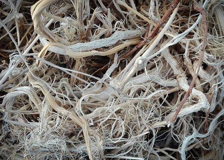 Beacheood Driftwood Wood Sticks Tangled Twisted Beach Napierbeach Wmm_brown Sticks 9vaga_letters9