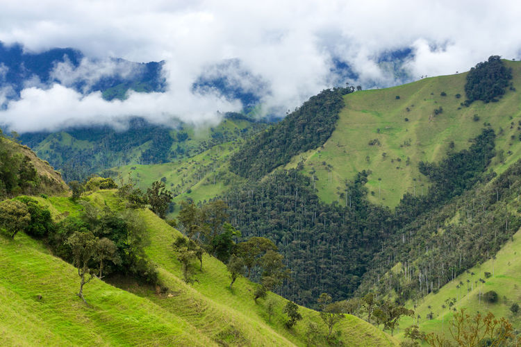 Scenic view of trees on mountains against cloudy sky at cocora valley