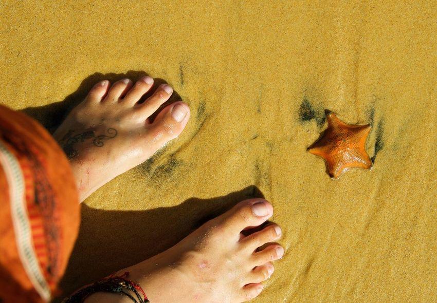 Starfish ⭐️ Barefoot Lifestyle Golden Sand Golden Bay New Zealand Beauty Abel Tasman Nationalpark Starfish  Surprise! Yellow Orange Nature_collection Nature Photography Wildlife & Nature Wildlife Photography EyEmNewHere