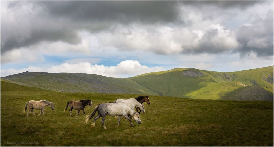 Wild Carneddau Ponies on the plateau of Llefn and Gyrn Landscape Cloud - Sky Cow Livestock Tranquil Scene Sky Nature Tranquility Scenics Animal Themes Beauty In Nature Mountain Mammal Domestic Animals No People Cattle Field Outdoors Day Green Color Snowdonia National Park Nature Snowdonia Hiking Tranquility