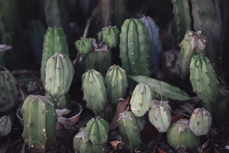 Close-up of succulent plants on field