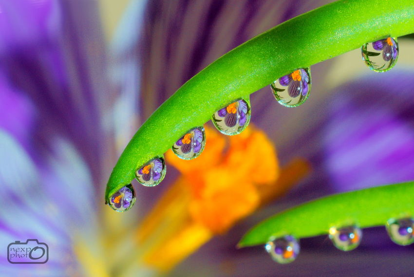 Flower in water droplets. Abstract Close-up Drop Droplet Flower Focus On Foreground Fresh Green Color Growth Leaf Macro Nature No People Plant Reflection Water Water Reflections