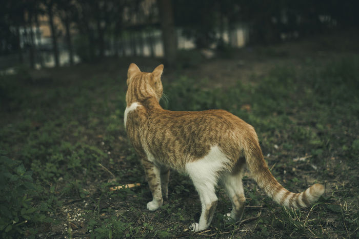 Attention Bobcat Hunter Power The Week On EyeEm Animal Themes Cat Day Domestic Animals Domestic Cat Feline Field Flexibility Garden Grass Hunt Hunting Kitten Mammal Nature Pets Stamina Stance Strength Structure