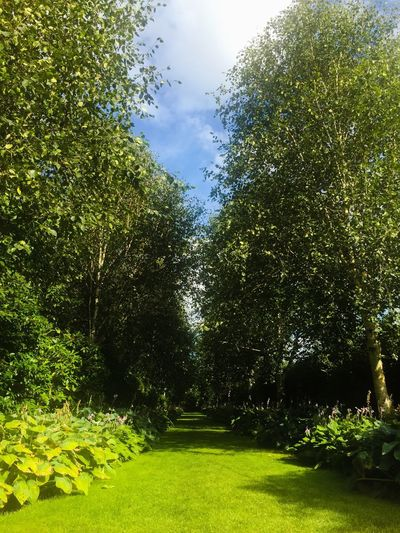 Trees And Sky Trees Landscape Summer #summertime #sun #TagsForLikes.com #hot #sunny #warm #fun #beautiful #sky #clearskys #season #seasons #instagood #instasummer #photooftheday #nature #TFLers #clearsky #bluesky #vacationtime #weather #summerweather #sunshine #summertimeshine Scotland