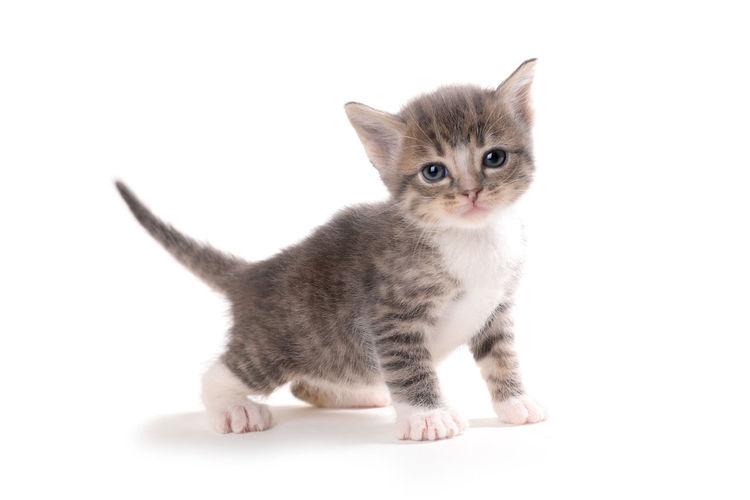 Portrait of cute kitten against white background