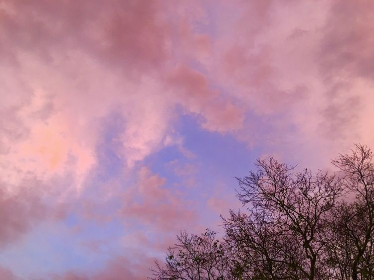 Cloud - Sky Sky Sunset Low Angle View Beauty In Nature Pink Color Plant Nature No People Tree Silhouette Outdoors Growth Scenics - Nature Day Tranquility Dramatic Sky Purple Dusk Romantic Sky