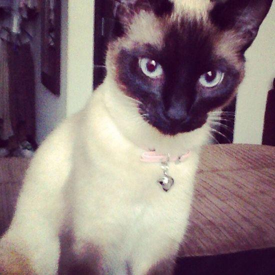 Cat Beautiful