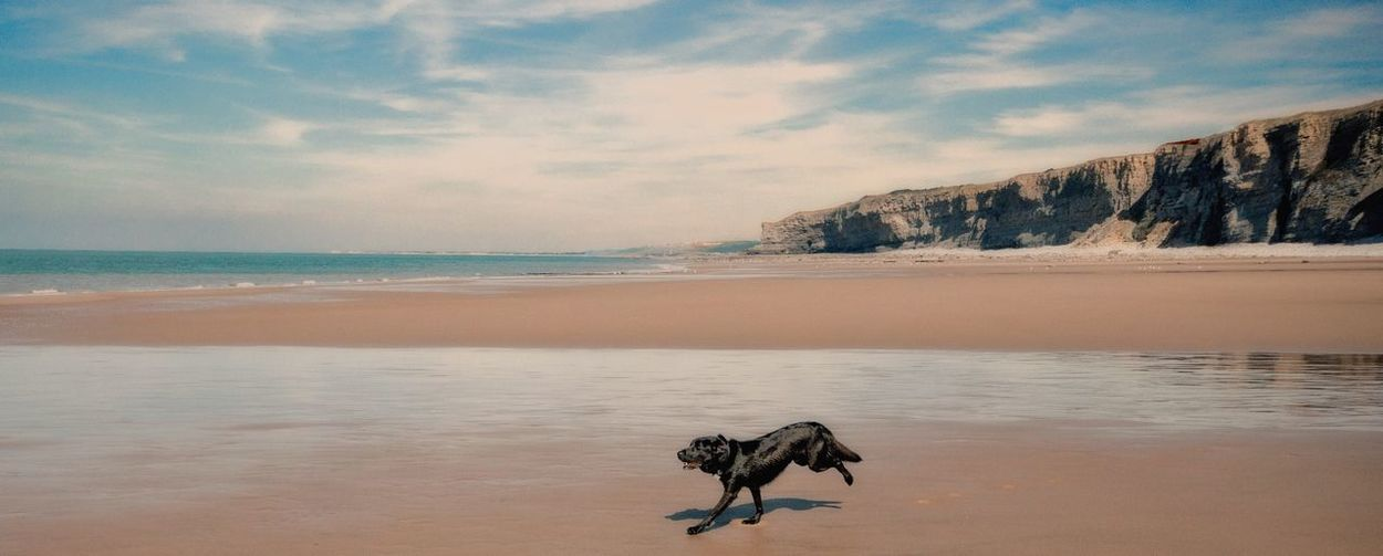 Dog Running On Shore At Beach Against Sky