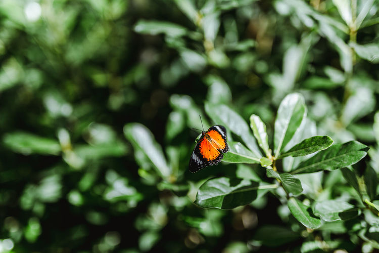 Butterfly. Invertebrate Insect Animal Themes Animal Wildlife Animal One Animal Animals In The Wild Plant Beetle Ladybug Close-up No People Nature Plant Part Green Color Day Leaf Selective Focus Beauty In Nature Focus On Foreground Outdoors Animal Wing Butterfly - Insect