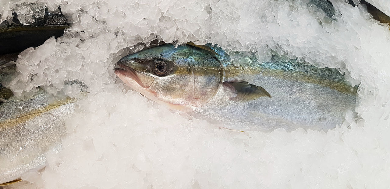 HIGH ANGLE VIEW OF FISH AND ICE